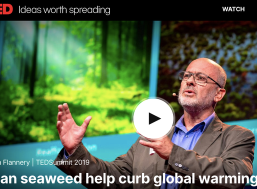 If 9% of ocean had seaweed farms we could drawdown all the CO2 we produce... Must see Ted Talk!