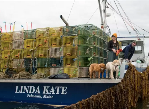 Kelp Farmer in Maine Creates Jobs for Women in Recovery