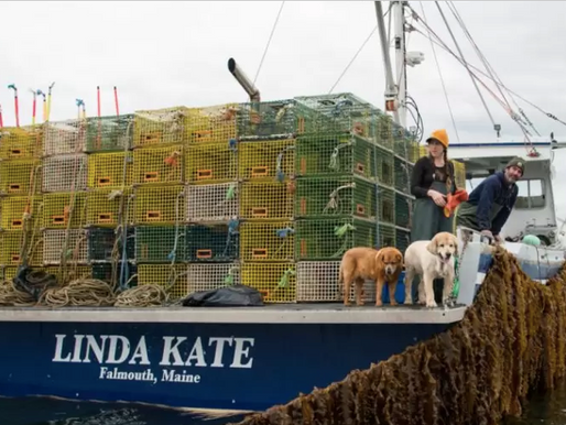 Kelp Farmer in Maine Creates Jobs for Women in Recovery