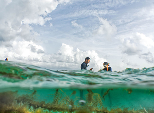 The Nature Conservancy & restorative seaweed aquaculture