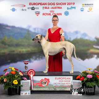 FCI Eurodogshow Wels