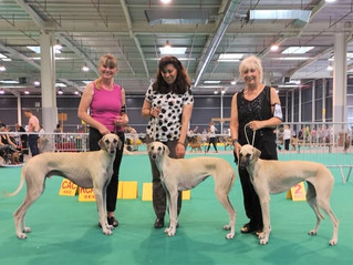 Golden Dog Trophy Show
