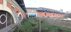 WILD GLADES green roof revival The Glades shopping Centre, Bromley