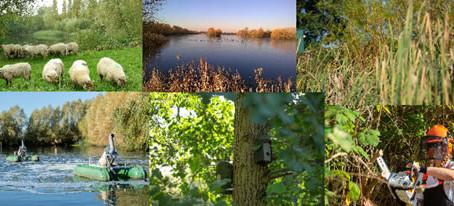 Heathrow Biodiversity Legacy Award winner Princes Lakes
