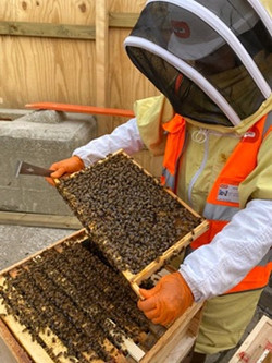 BeeOmonitoring at Hallsville Quarter (HQ) development