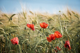 pexels-pixabay-461284.jpg