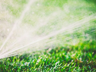 August Lawn Care Tips for Austin Curb Appeal