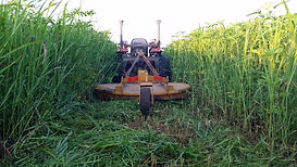 Brush hog bozhog mowing Oklahoma City