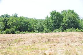 Cedar tree pile mulched