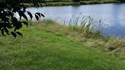 webiste - pond with tree leaves left.jpg