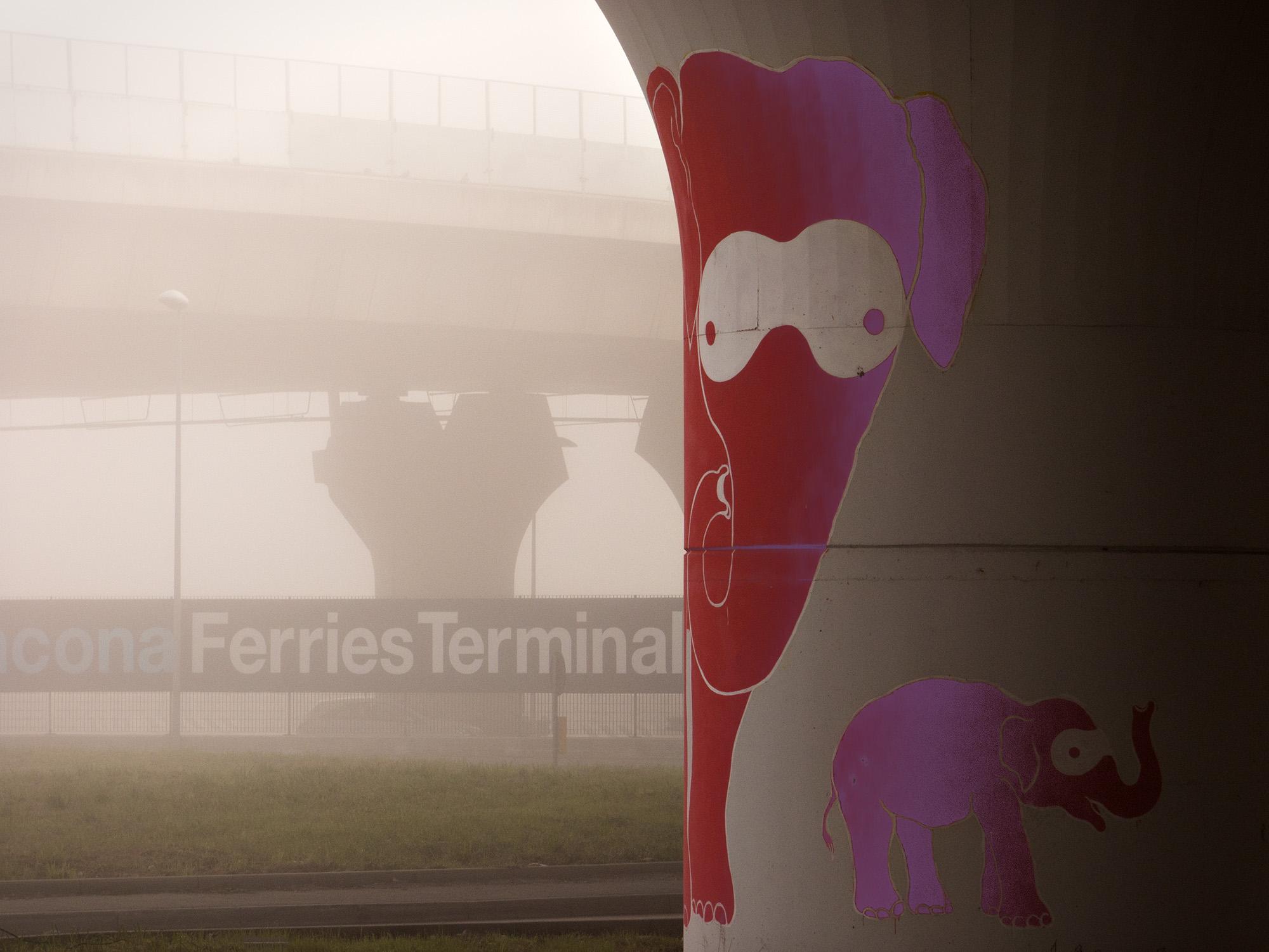 sometimes I see rose elephants...
