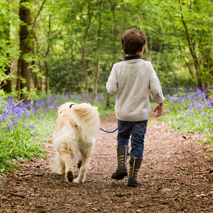 Boy and Dog Portrait Woodland Surrey