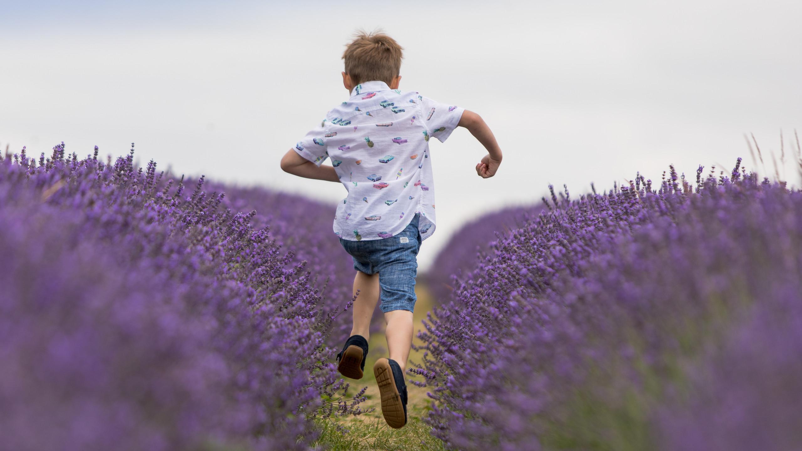 Boy running down lavender fields