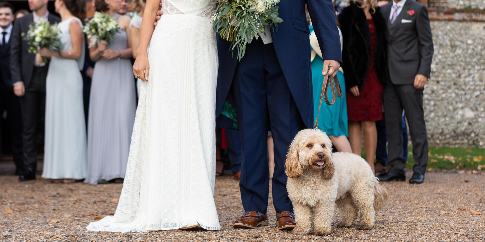 Fur_Baby_Hampshire_natural_wedding_photography_Rachel_Thornhill_Photographer