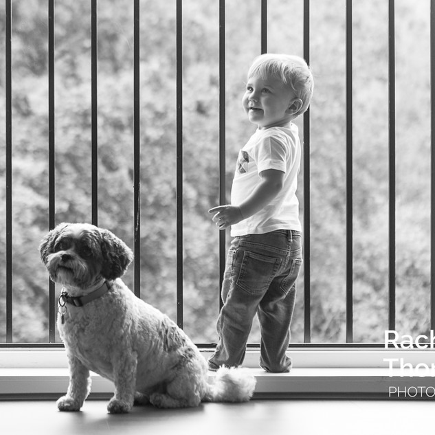 Toddler and Dog Lifestyle Portrait