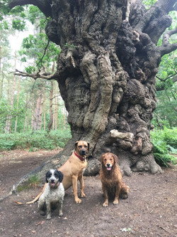 Amber Zuri Ziggy tree
