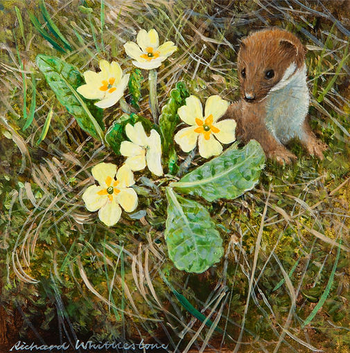Weasel and Primroses RW702P