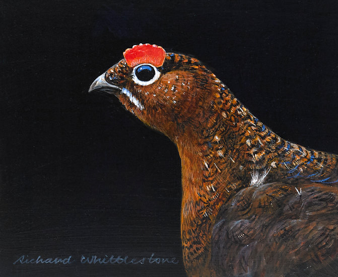 Red Grouse Portrait