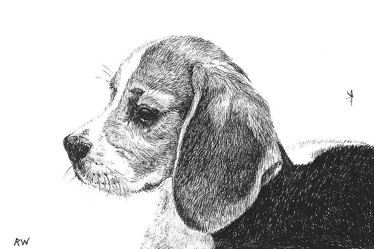 Beagle Baby RW002PI