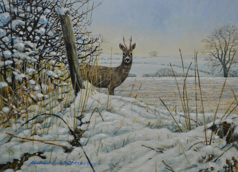 Roe Buck in Winter