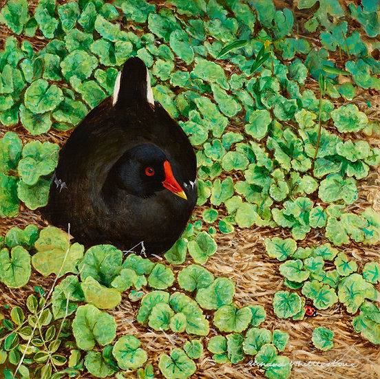 Moorhen Resting Bird Painting by Wildlife Artist Richard Whittlestone