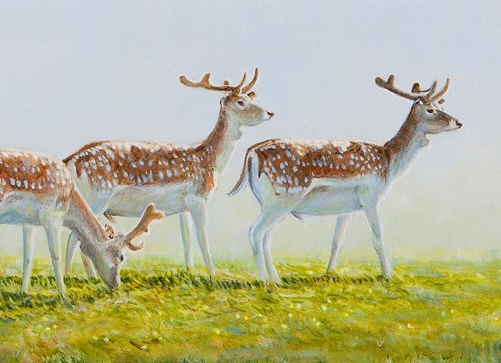 Fallow Deer in Velvet 0112C (Pack of 3 A5)