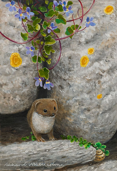 Weasel Toadflax Painting by Wildlife Artist Richard Whittlestone
