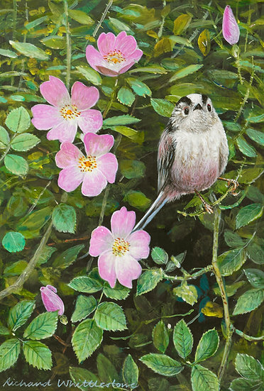 Long-tailed Tit and Wild Rose