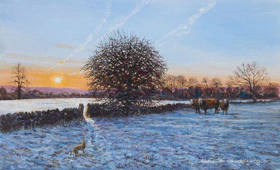 Wildlife Greetings Cards by Artist Richard Whittlestone (Winter Solstice)