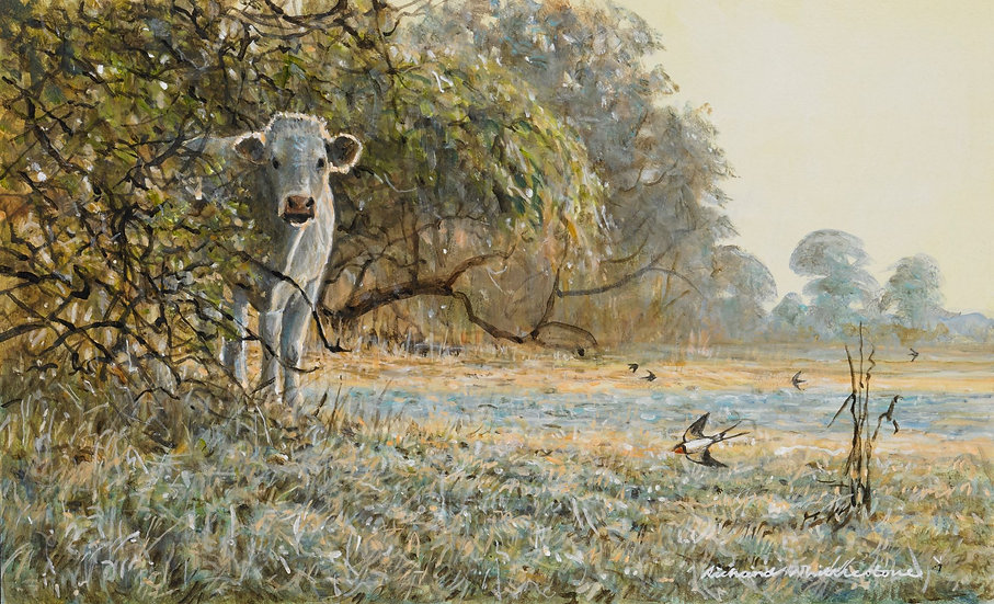 August Charolais Painting by Wildlife Artist Richard Whittlestone