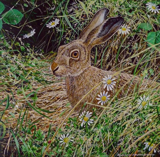 Meadowsweet Print by Wildlife Artist Richard Whittlestone