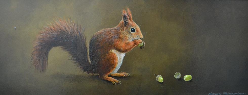 Red Squirrel Acorns Print by Wildlife Artist Richard Whittlestone