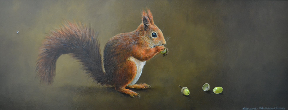 Red Squirrel and Acorns RW544P