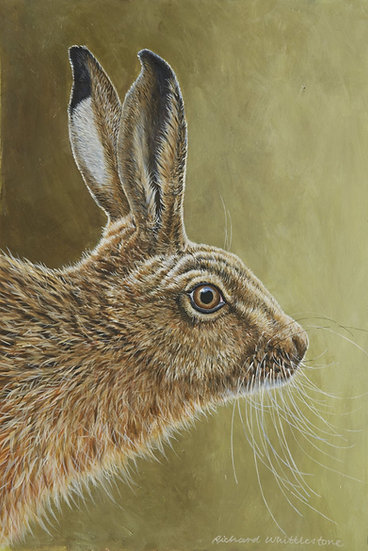 Portrait Hare Print by Wildlife Artist Richard Whittlestone