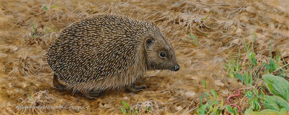 Hedgehog Spies Worm Painting by Wildlife Artist Richard Whittlestone