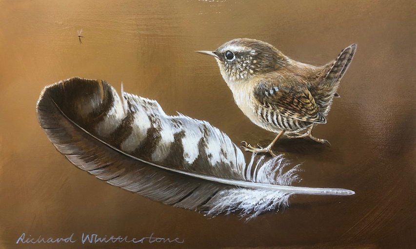 Wren and a Buzzard Feather