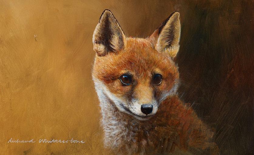 Fox Cub Portrait RW2656P