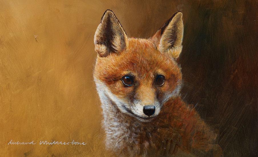 Fox Cub Portrait