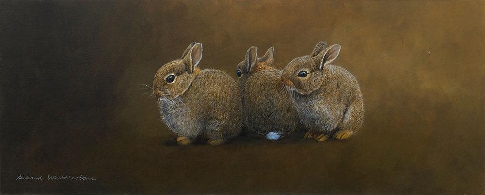 Rabbit Row Painting by Wildlife Artist Richard Whittlestone