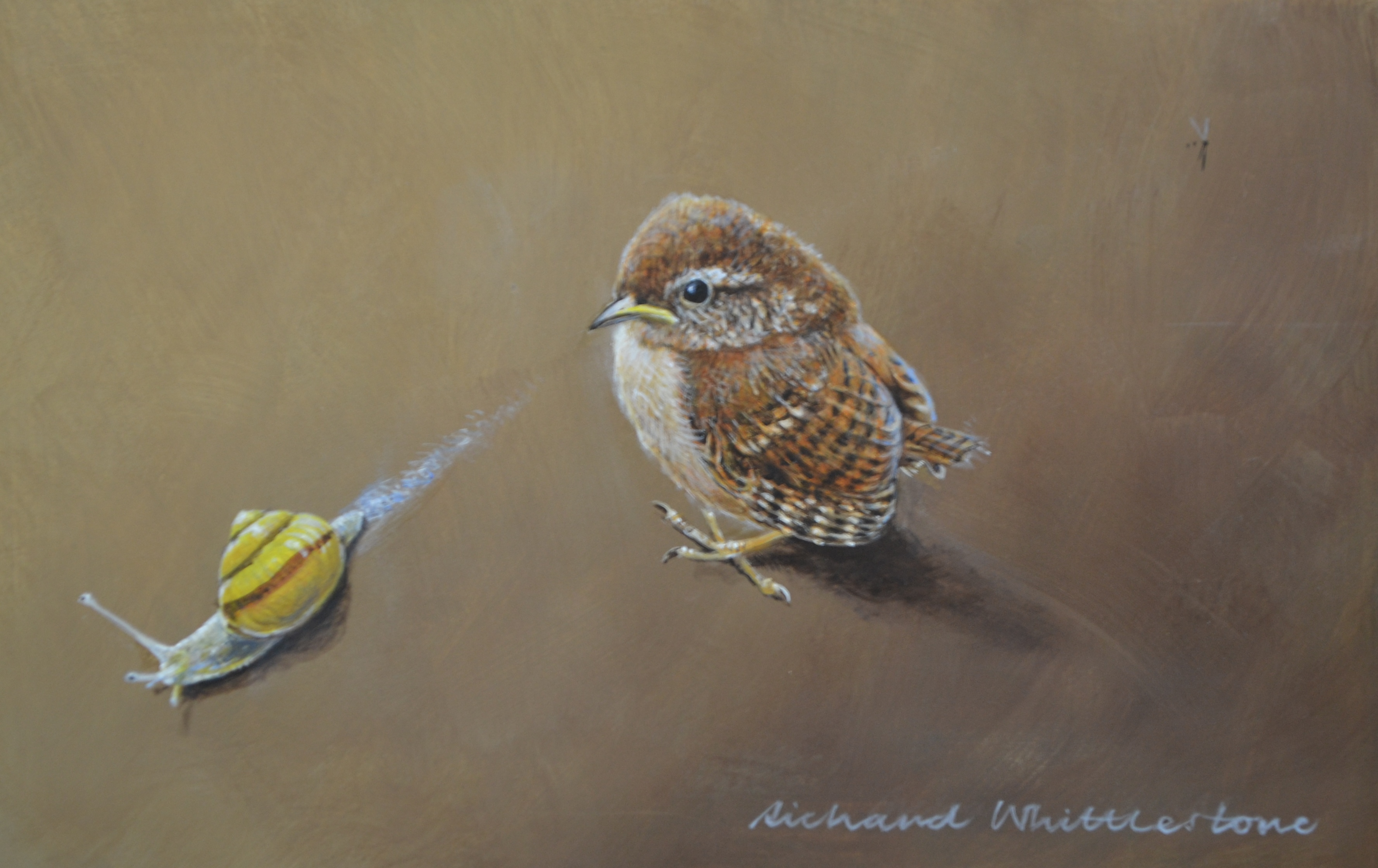 Young Wren and a Snail