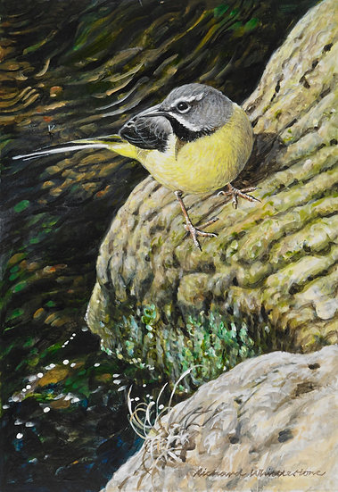 Wildlife Greetings Cards by Artist Richard Whittlestone (Wagtail)