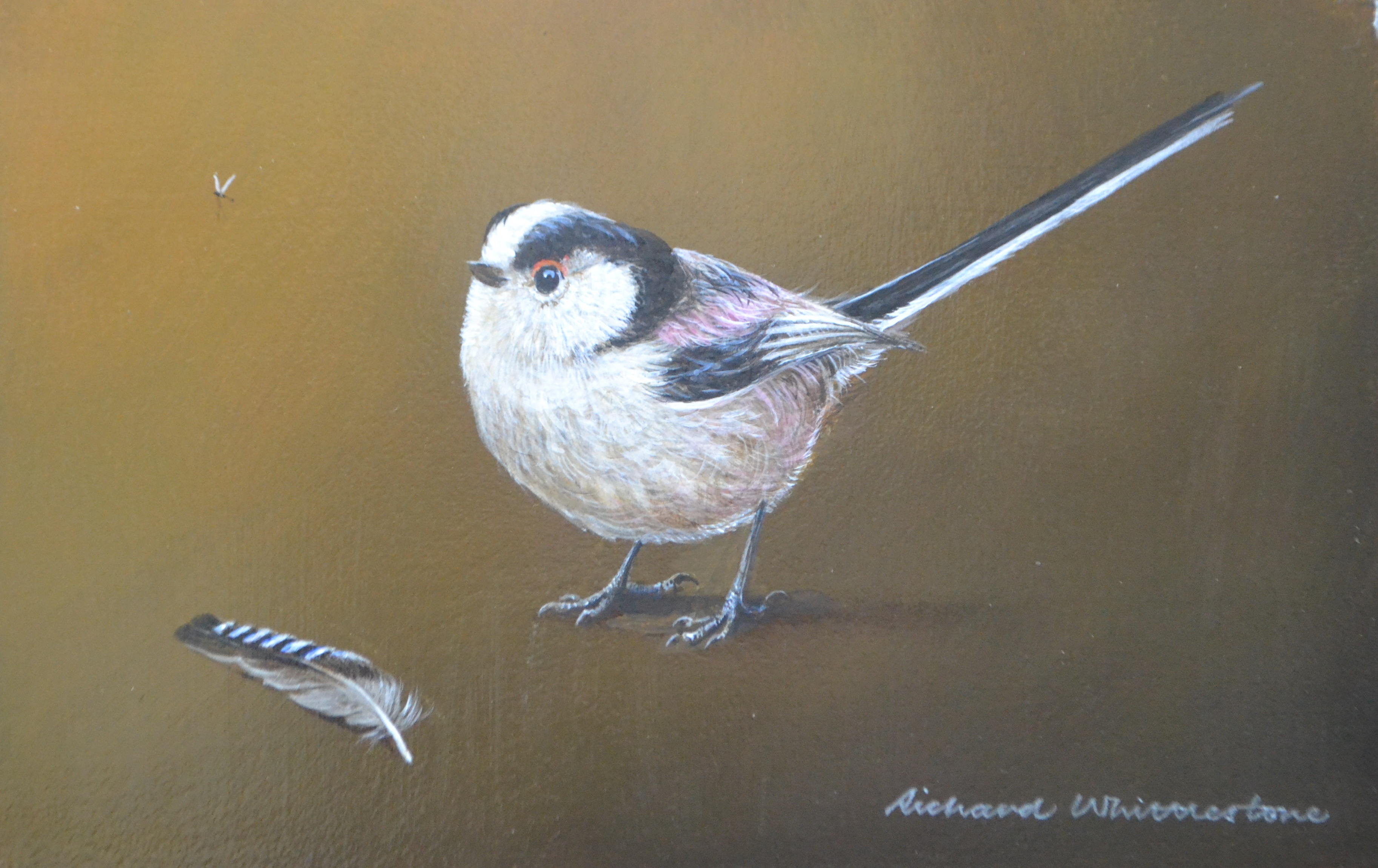 Long-tailed Tit and a Jay Feather