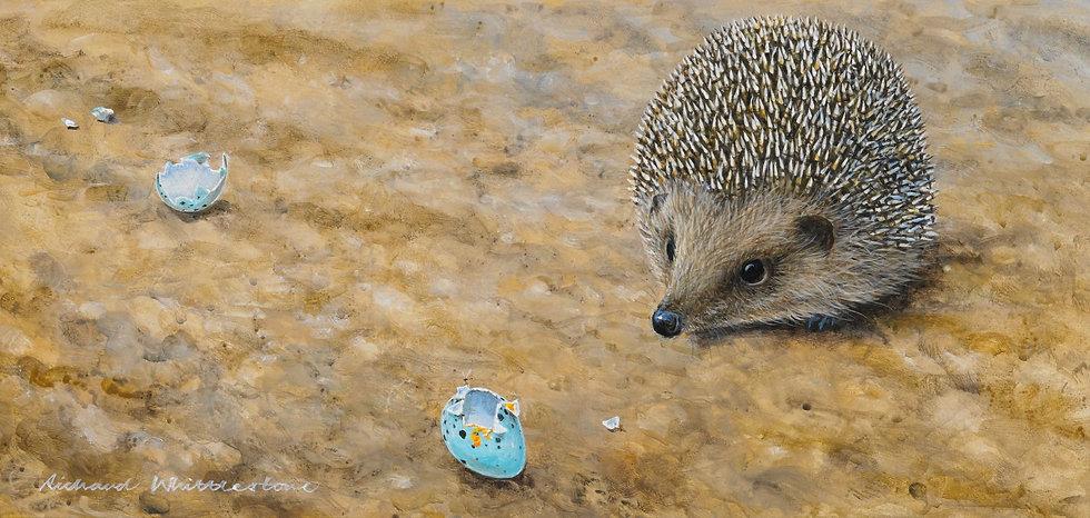 Hedgehog Broken Thrush Eggs Painting by Wildlife Artist Richard Whittlestone