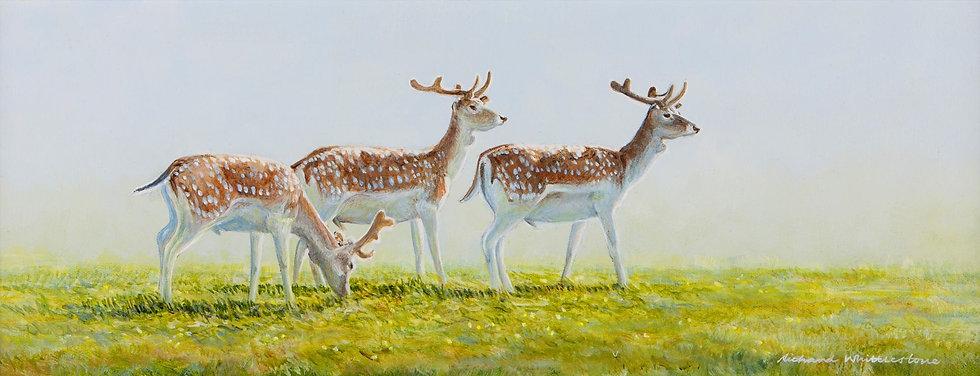 Fallow Deer Velvet Print by Wildlife Artist Richard Whittlestone