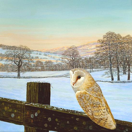 Winter Glow Bird Print by Wildlife Artist Richard Whittlestone
