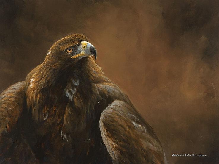 Wildlife Greetings Cards by Artist Richard Whittlestone (Golden Eagle)