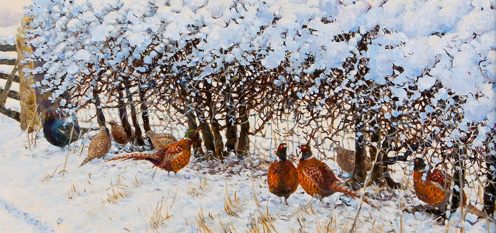 Wildlife Greetings Cards by Artist Richard Whittlestone (Pheasants Sheltering)