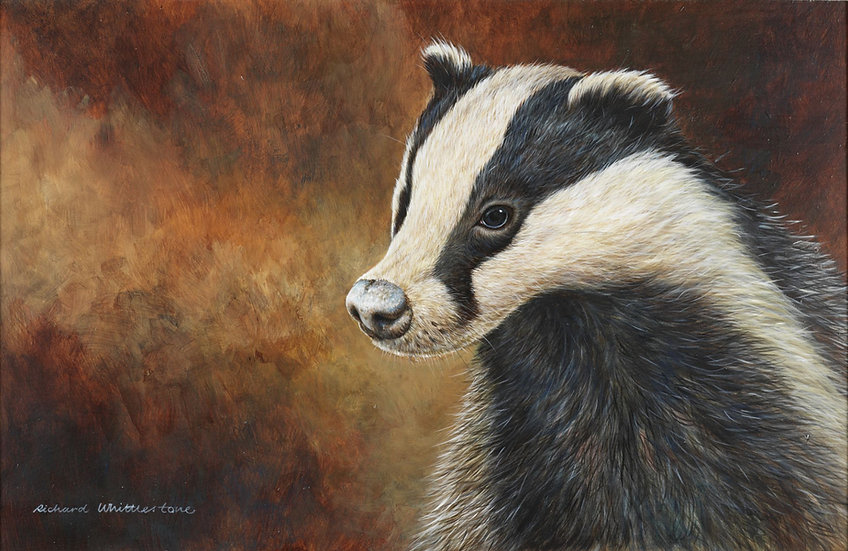 Badger Portrait Print by Wildlife Artist Richard Whittlestone