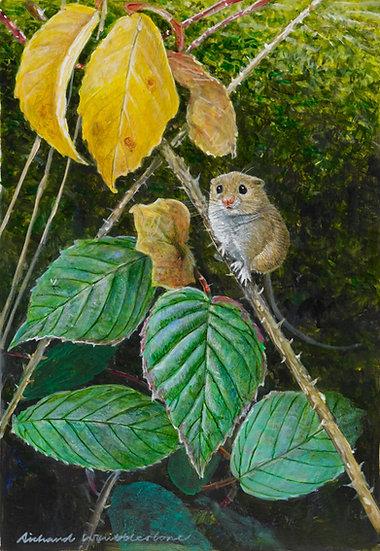 Harvest Mouse Painting by Wildlife Artist Richard Whittlestone