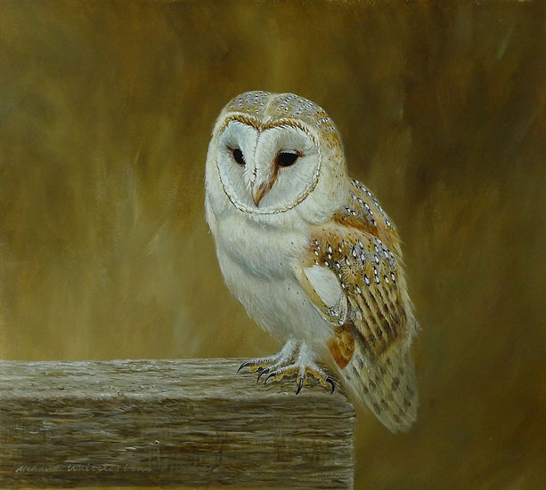 Barn Owl Portrait Bird Painting by Wildlife Artist Richard Whittlestone